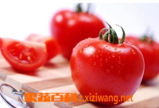 果蔬百科西红柿
