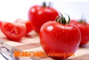 西红柿的作用 西红柿贮存要领和烹煮知识
